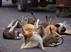 Source by fbbln_ videos wallpaper cat cat memes cat . - Source by fbbln_ videos wallpaper cat cat memes cat videos ca - Funny Animal Pictures, Funny Animals, Cute Animals, Animals Images, Crazy Cat Lady, Crazy Cats, I Love Cats, Cute Cats, Chat Bizarre