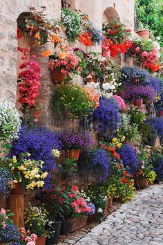 outdoor flowers Hanging Plants and Flowers, Spello, Umbria Dream Garden, Garden Art, Hanging Plants Outdoor, Outdoor Flowers, Patio Plants, Deco Floral, Plant Wall, Garden Projects, Garden Inspiration