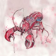 pencil, ink and watercolor ©caseybrodley Lobster Tattoo, Lobster Art, Lobster Drawing, Sketch Inspiration, Painting Inspiration, Abstract Watercolor, Watercolor Paintings, Fish Art, Watercolor Techniques