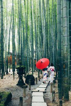 Kimono Forest, Kyoto. bamboo