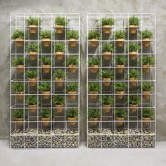Giardino verticale domestico