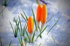 Will the 2015 spring period (March to May) replicate the cold and wintry spring of 2013 for the UK & Ireland? Or will it be warm/hot? @ http://www.exactaweather.com/Buy_Forecasts.html  This forecast has also been uploaded to the member's login area.