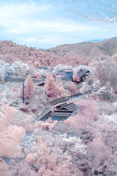 Eyes say yes but mind can't believe. pinkish-sakura-yoshino-yama.jpg (1258×1900)