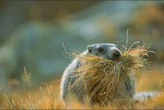 @ New bedding?  -  Wildphotos by Stefano Unterthiner | Smashing Picture