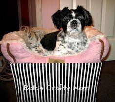 Bella's Crafty Mom Easy Doggy Car Seat