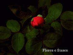 Maravilhosas são as rosas perfumadas com amor. Assim são as pessoas que com doçura encantam o nosso coração e com a alma nos abraçam. Existem anjos em formas humanas, eu creio. Estão tão próximos como o céu que habita em mim.  Tesouros, pura essência divina.   Vitor Ávila