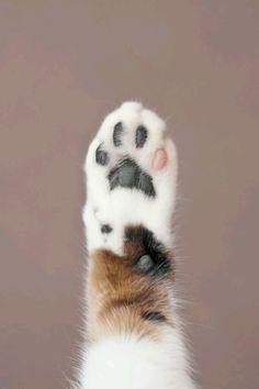 Quem ama gato levanta a mão-pata.