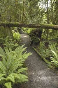 Fern Grotto trail in Kauai...well I've already been on this one.