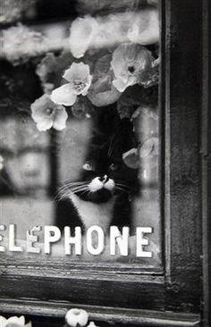 Le Chat du Fleuriste - Brassai