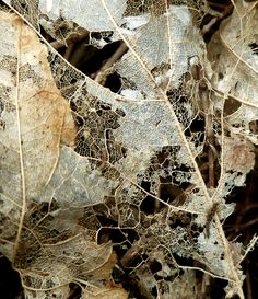 looks like lace, so delicate Patterns In Nature, Textures Patterns, Decay Art, A Level Textiles, Growth And Decay, A Level Art, Natural Forms, Wabi Sabi, Delicate