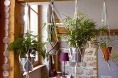 "Plantes vertes ""suspendues"" - DiY"
