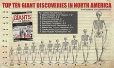 Graphic chart displaying the heights of various giant discoveries in North America (authors supplied)