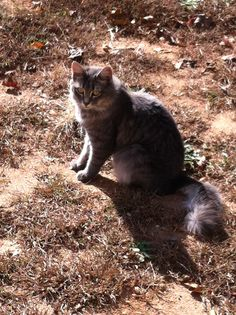 Mandi, supervisor at our Winston-Salem Plow & Hearth store, sent in this picture of her cat, Kitty Gurl.
