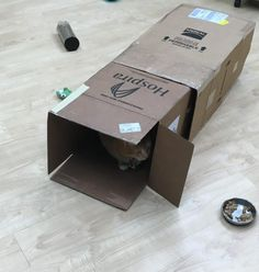 Como fazer brinquedos para gatos com papelão - 6 brinquedos fáceis!. O comportamento de brincadeira é essencial para o bem-estar dos gatos. Você sabia que, na natureza, os gatos passam 40% do tempo deles caçando? É por essa razão que...