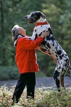 See more 5 Biggest dogs with their owners