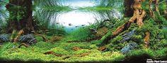 Aquariophilie l'aquascaping japonnais