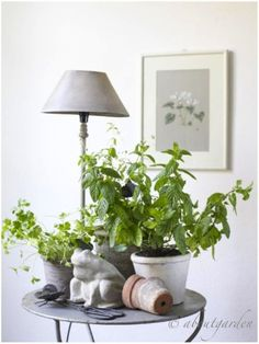 Herbs near a window