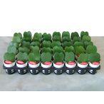面の部分にメッセージを書くことが可能な植物「ラブハートプリティーポット」 http://www.akkis.jp/item/lo05/