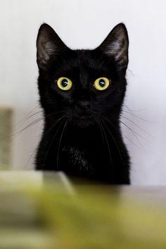 Big-eyed black kitten