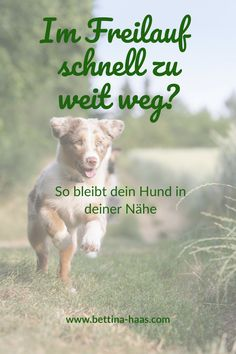Im Freilauf schnell zu weit weg? - Bettina Haas, Hundetraining Hersbruck Does your dog run too far away when freewheeling? So you can reduce the radius and get more attention from your dog again. Best Dog Names, Best Dogs, Funny Dogs, Funny Animals, Crazy Girlfriend Meme, Dog Runs, Dog Hacks, Far Away, Dog Life