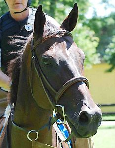 The story of the rescue of Rubber Duckie, a race horse abandoned in a garage.