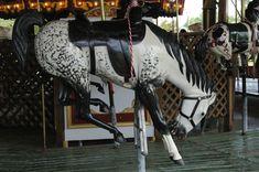 cowboy-carousel-10.jpg 3,008×2,000 pixels