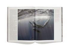 Avaunt Magazine, Issue 2 - Matt Willey