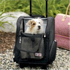 US $60.50 New in Pet Supplies, Dog Supplies, Carriers & Totes