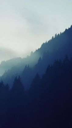 Misty Forest Tree Line Android Wallpaper