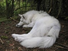 wolf beautiful white landscape nature forest amazing fantasy game of thrones ghost Paganism pagan wicca white Woolf Animals And Pets, Funny Animals, Cute Animals, Exotic Animals, Nature Animals, Wild Animals, Wolf Spirit, Spirit Animal, Beautiful Creatures