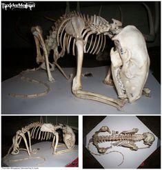 lion paw skeleton - Поиск в Google | Griphon | Pinterest | Lion ...