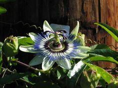 Exotic rain forest flower