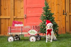 Christmas card idea, photography props, red wagon, vintage door, pet photography