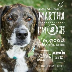 ADOPT MARTHA! Martha is 8 years old and has been homeless for over a year, after being displaced due to California wildfires. Martha is good with kids and other dogs and loves going on walks. Currently available in Petaluma, CA, but can be adopted out of state. #adoptdontshop Animal Shelter, Animal Rescue, California Wildfires, Foster Dog, Love Is Gone, Pet Health, Dog Friends, The Great Outdoors, Pet Adoption