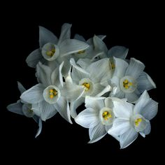 •♥• NIGHTS IN WHITE SATIN... Narcissus Paperwhites by Magda Indigo on 500px