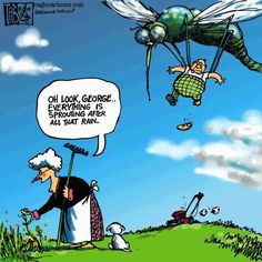 #Mosquito #MosquitoControl
