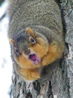 saw this fatasshit squirrel the other day, must've been a DG...