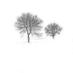 white by idlphoto, via Flickr