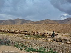 A shepherd leads his sheep in the wilderness. Photo by Ferrell Jenkins. The Shepherd, One Kings, Jerusalem, Geography, Wilderness, Israel, Sheep, Sky, History