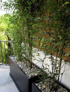 bamboo plants in planters with pebbles