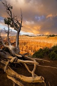 ~ Bryce Canyon National Park ~ Utah....