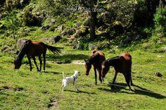Parque Nacional da Peneda-Gerês, Portugal (3)