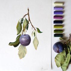 pastel painting soft pastel drawing plum слива пастелью сухая пастель