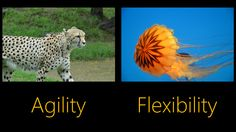 Project Management Crumbs: Which are the agile project management's disruptive features?