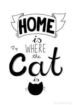 El hogar es donde esta el gato.