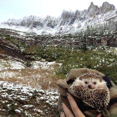 biddy cute hedgehog adventures