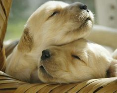 I had one of these golden doggies once - Sally the Wonder Dog.
