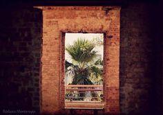 Parque das Ruínas / Santa Teresa #parkofuins #ruins #park #santateresa #riodejaneiro #brazil #photography