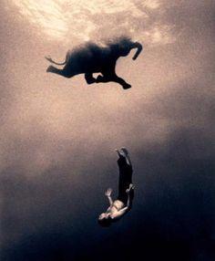 Elephant Swiming
