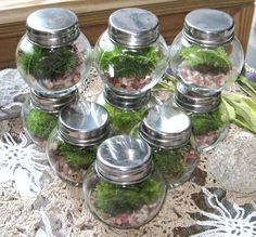 Mini Moss Terrariums, great wedding decorations or favors